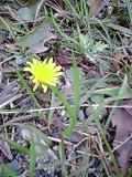 image/manganji-2006-03-06T08:38:38-1.jpg