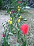 image/manganji-2006-04-21T08:19:49-2.JPG